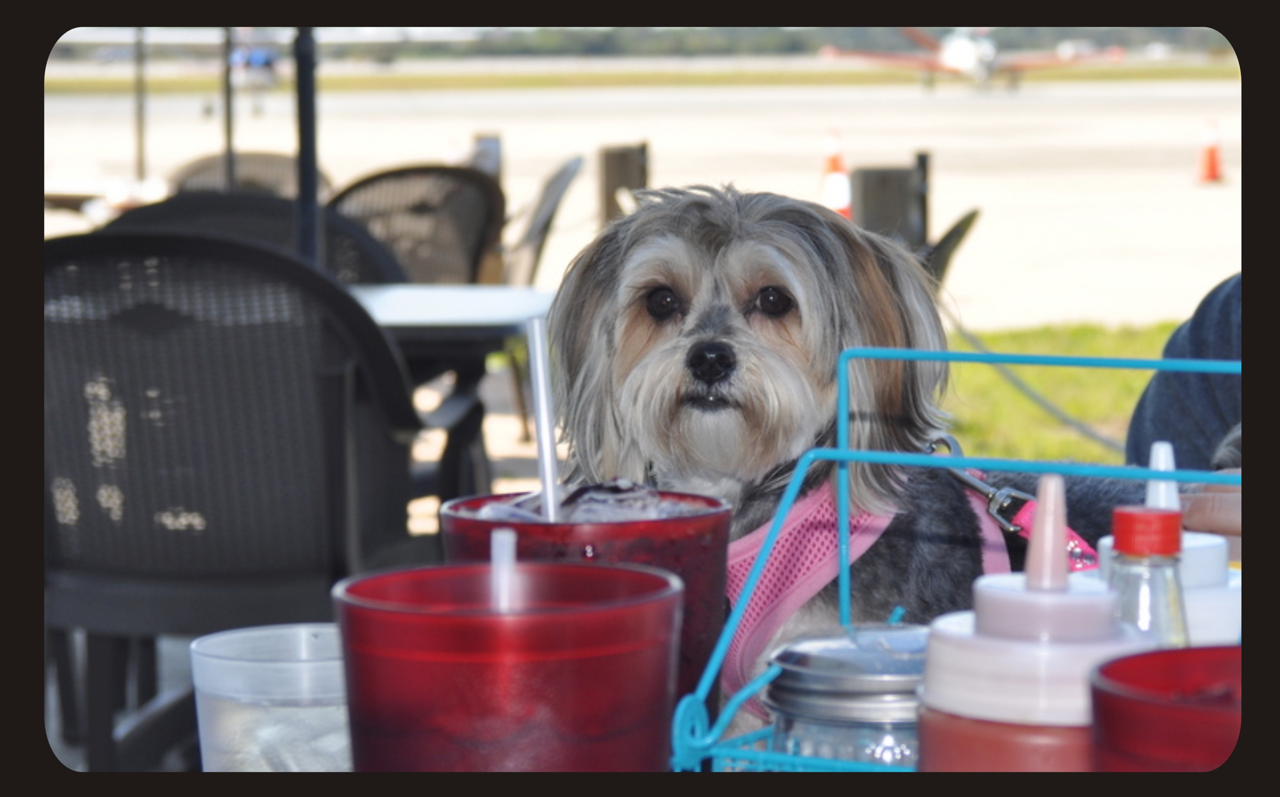 Dog Friendly Restaurant New Smyrna Beach